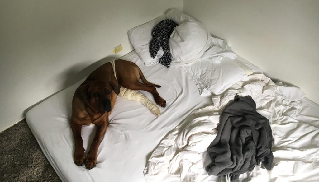 Ein Matratzenlager sorgt dafür, dass er seine erste Nacht bequem und nah am Boden hat