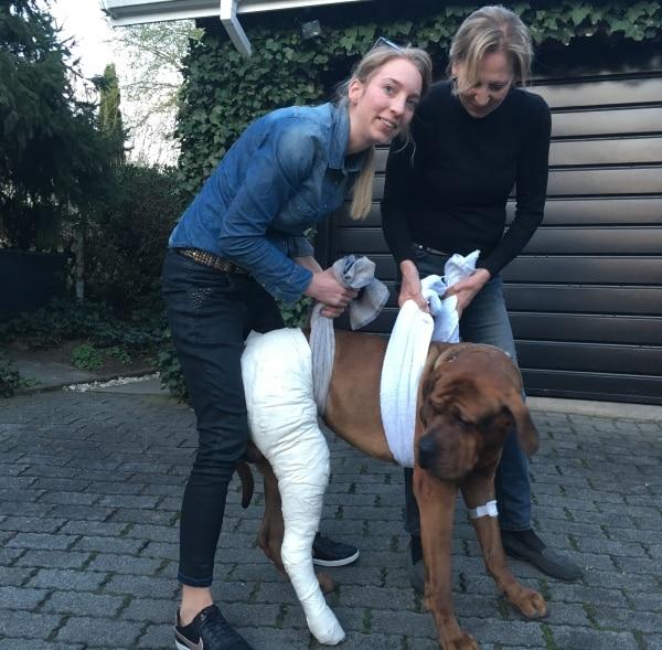 Kreuzbandriss Erfahrungen - Der Hund wird auf den ersten Metern gestützt
