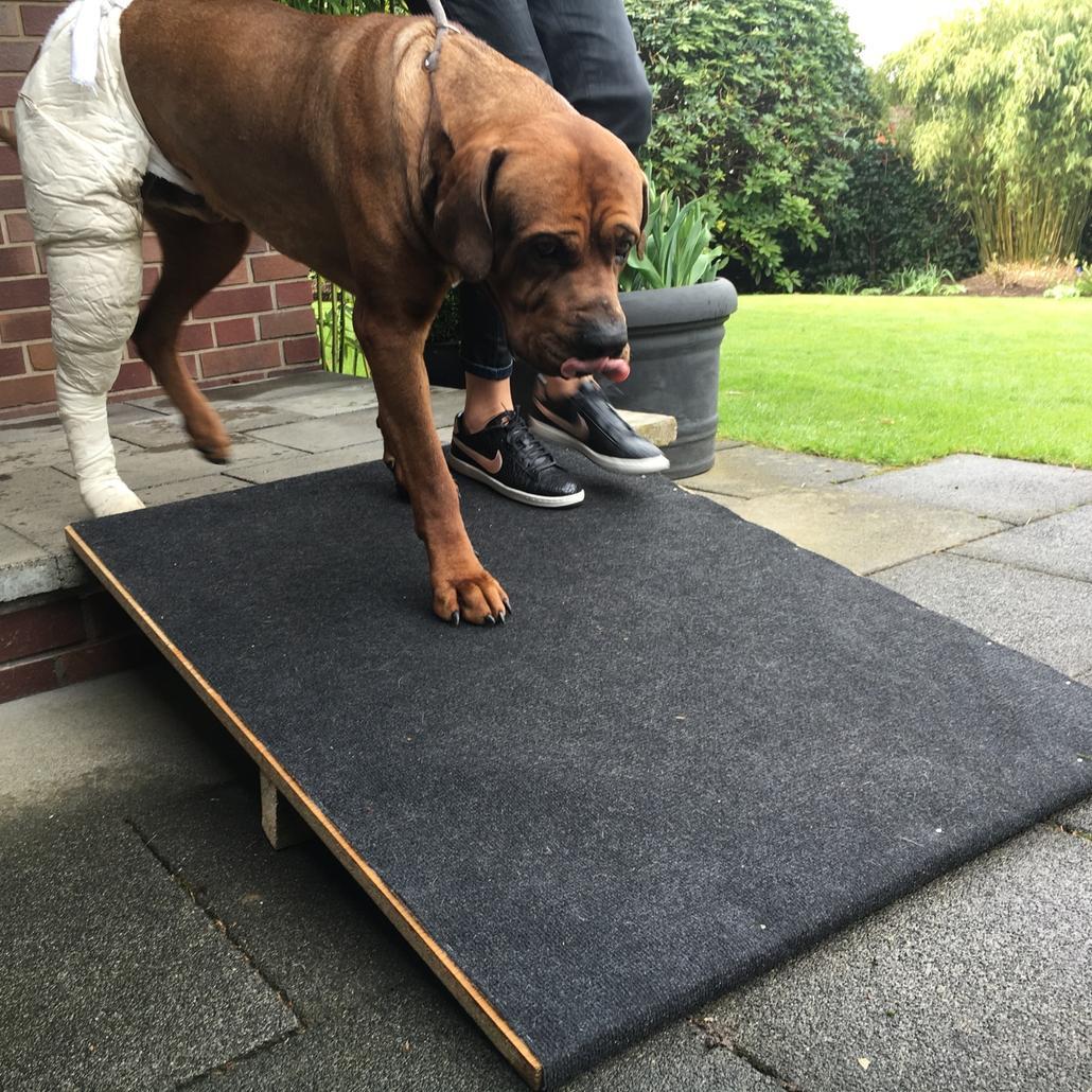 Rampe für kranken Hund